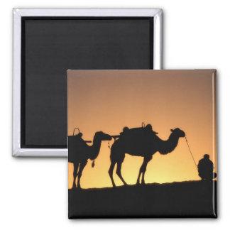 Silhouette of camel caravan on the desert at 2 magnet
