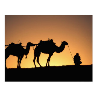 Silhouette of camel caravan on the desert at 2 postcard