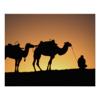 Silhouette of camel caravan on the desert at 2 posters