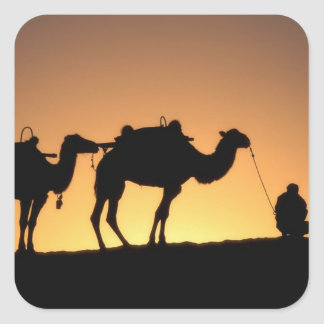 Silhouette of camel caravan on the desert at 2 square stickers