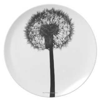 Silhouette of dandelion plates