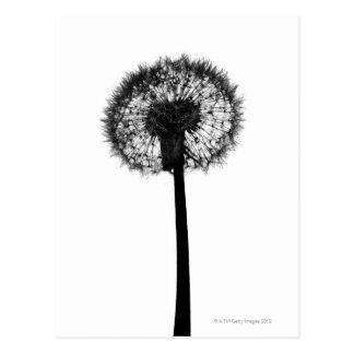 Silhouette of dandelion postcard