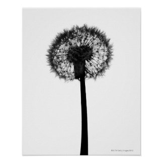 Silhouette of dandelion poster