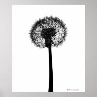 Silhouette of dandelion poster