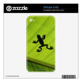 Silhouette of frog through banana leaf decals for iPhone 4