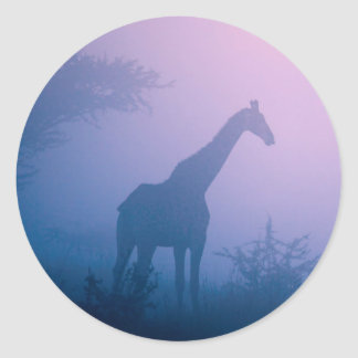 Silhouette Of Giraffe (Giraffa Camelopardalis) Classic Round Sticker