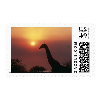 Silhouette of Giraffe (Giraffa Camelopardalis) Postage