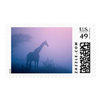 Silhouette Of Giraffe (Giraffa Camelopardalis) Postage Stamp