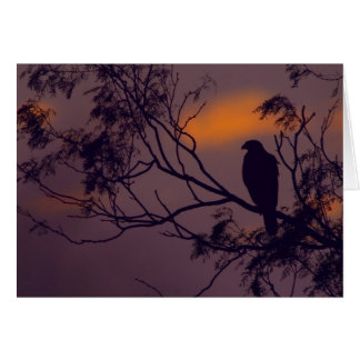 Silhouette of Harris Hawk (Parabuteo unicinctus) Greeting Card