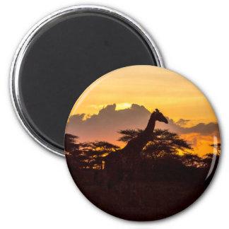 Silhouette of Masai Giraffe Magnet