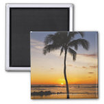 Silhouette of one Palm Tree by a Red Orange Sunset Fridge Magnet