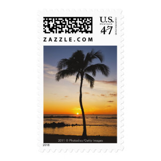 Silhouette of one Palm Tree by a Red Orange Sunset Postage