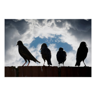 silhouette of starlings on a wall poster