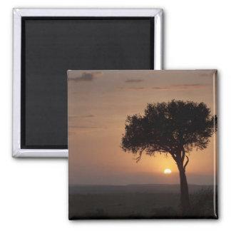 Silhouette of tree on plain, Masai Mara 2 Magnet