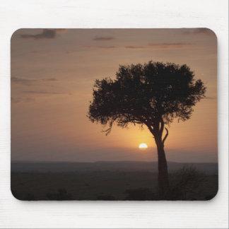 Silhouette of tree on plain, Masai Mara 2 Mouse Pad