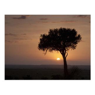Silhouette of tree on plain, Masai Mara 2 Postcard