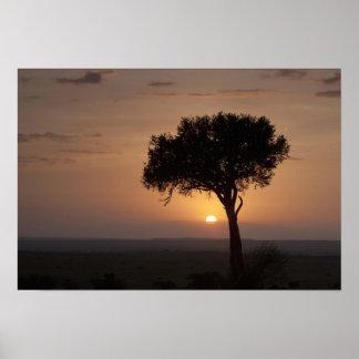 Silhouette of tree on plain, Masai Mara 2 Poster