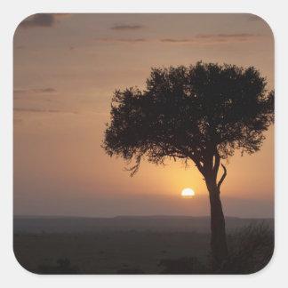 Silhouette of tree on plain, Masai Mara 2 Square Sticker
