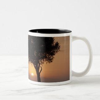 Silhouette of tree on plain, Masai Mara 2 Two-Tone Coffee Mug