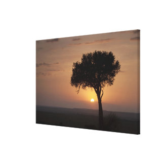 Silhouette of tree on plain, Masai Mara Canvas Print