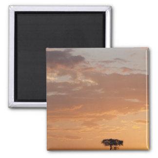 Silhouette of tree on plain, Masai Mara Magnet