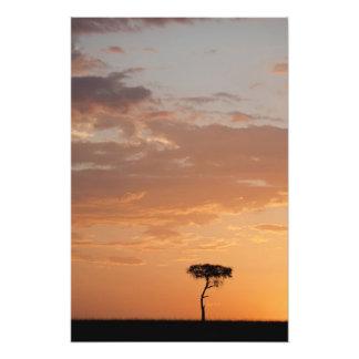Silhouette of tree on plain, Masai Mara Photo Print