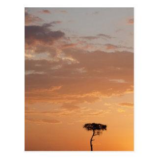 Silhouette of tree on plain, Masai Mara Postcard