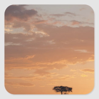 Silhouette of tree on plain, Masai Mara Sticker