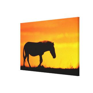 Silhouette of zebra on savanna canvas print