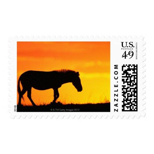 Silhouette of zebra on savanna stamp