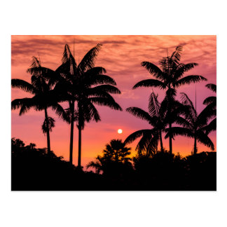 Silhouetted palm trees, Hawaii Postcard