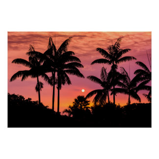 Silhouetted palm trees, Hawaii Poster