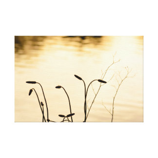 Silhouetted plants at the side of a lake at sunset canvas print