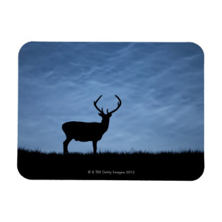Silhouetted Red Deer Stag at Night Magnet
