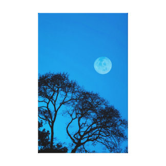 Silhouetted trees and full moon gallery wrapped canvas