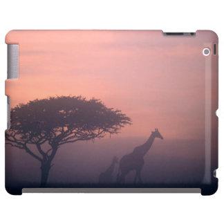 Silhouettes Of Giraffes