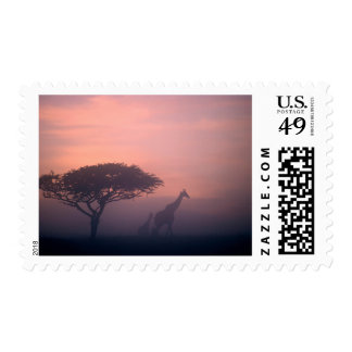 Silhouettes Of Giraffes Stamp