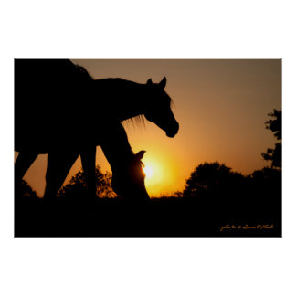 Silhouettes of Two Horses at Sunrise Poster