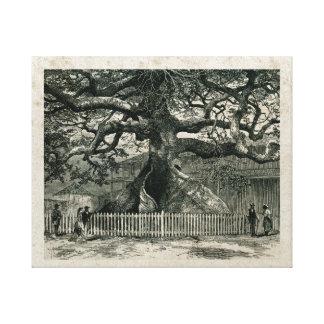 Silk Cotton Tree Canvas Print