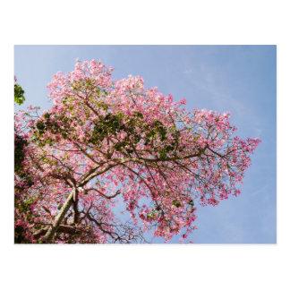 Silk Floss Tree Blossom Postcard