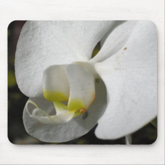 Silk - Orchid - Floral Phtography Mouse Pad