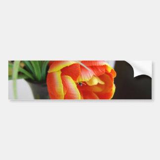 Silk Tulip Bumper Sticker