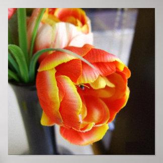 Silk Tulip Canvas Print