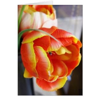 Silk Tulip Greeting Card