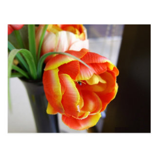 Silk Tulip Postcard