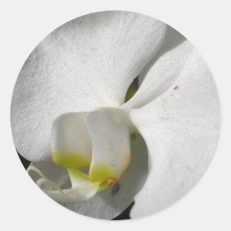 Silk White Orchid Round Sticker