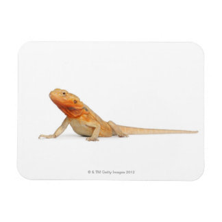 SilkBacks scaleless Bearded Dragon - Pogona Magnet