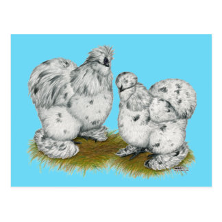 Silkie Bantam Splash Chickens Postcard