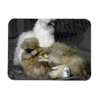 Silkie Chickens with Chicks Magnets