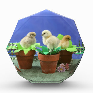 Silkie Chicks in Bloom Award